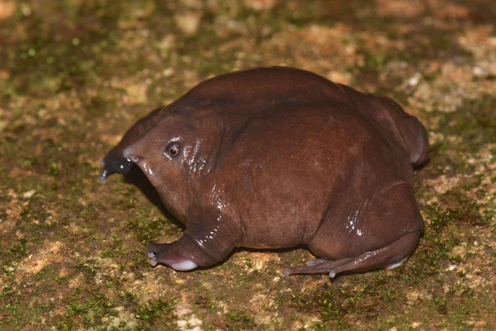 Purple-Frog-Male_Sandeep-Das-1000x667.jpg