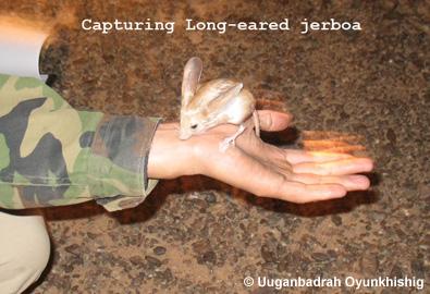 capturing_jerboa.jpg